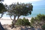 dune, ginepri, spiaggia,mare