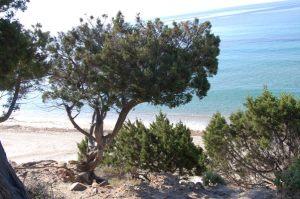 dune, ginepri, spiaggia, mare