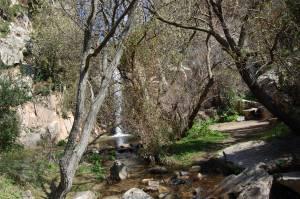 corso d'acqua nel bosco