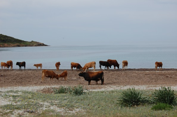 Domus de Maria, Piscinnì, spiaggia