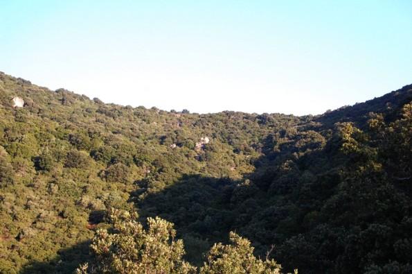 Sardegna, bosco