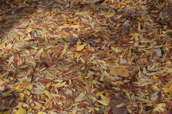 foglie nel bosco