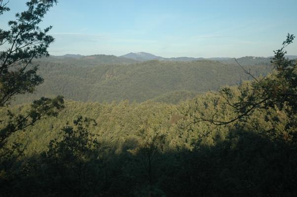 Appennino, boschi dell'Umbria