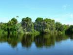 foresta pluviale, Brasile