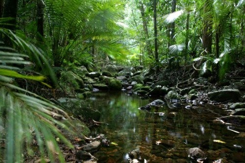 Brasile, foresta pluviale