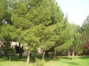 Oristano, parco Via Versilia