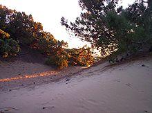 San Vincenzo, dune di Rimigliano