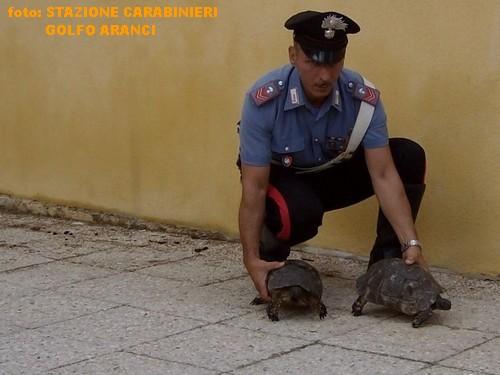 Delinquenti trafficanti di tartarughe bloccati in sardegna for Sassi per tartarughe