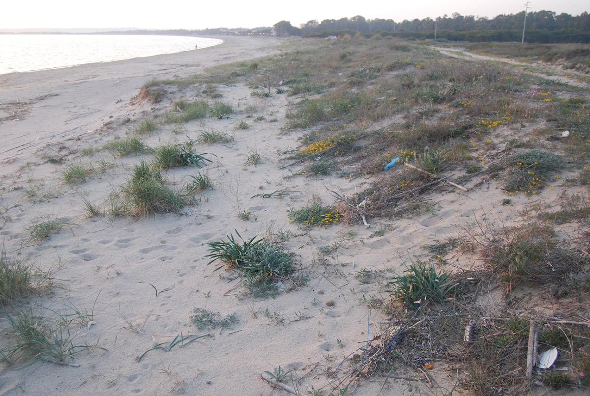 Oristano, Torregrande, duna sabbiosa