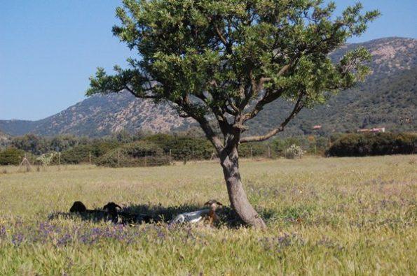 Sardegna, paesaggio agrario