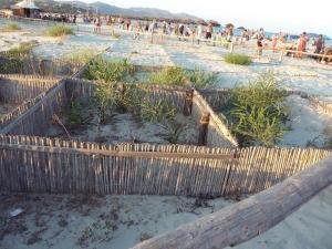 Villasimius, dune di Cala Giunco, mimose