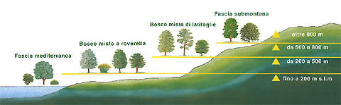 i boschi in Italia