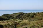Sardegna, macchia mediterranea sulmare