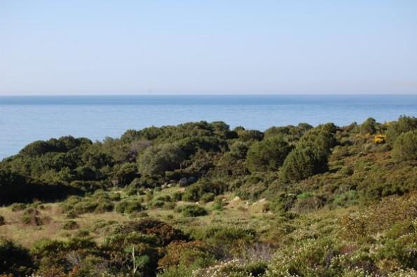 Sardegna, macchia mediterranea sul mare