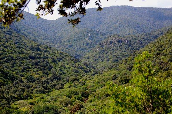 Sardegna, foresta mediterranea di S'Acqua Callenti (Castiadas)