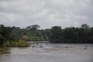 Liberia, foresta di Gobar