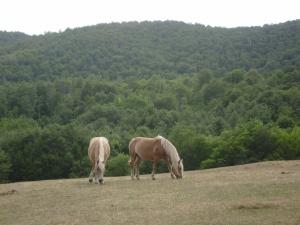 Toscana, cavalli al pascolo