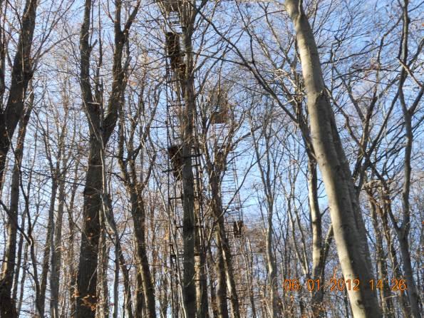 Schio, Monte Magrè, altane di caccia nel bosco