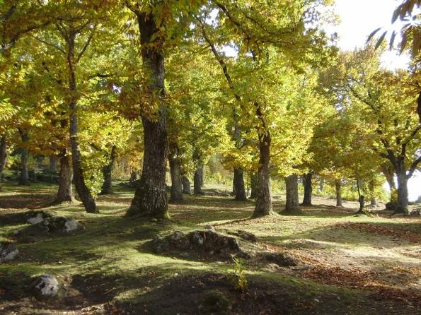 Maremma, bosco