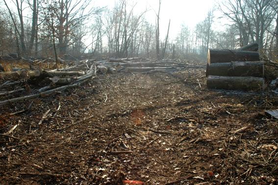 Zerbolò, taglio del bosco di Venara