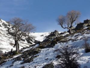 Desulo, Gennargentu, foresta di Girgini