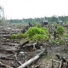 Cambogia, taglio foreste