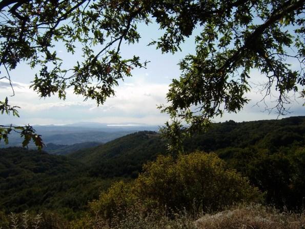 Monte Amiata, boschi