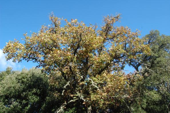 alberi e fronde