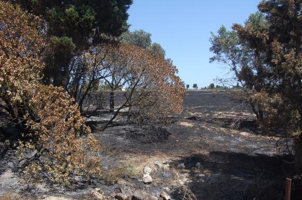 Cagliari, Molentargius, effetti dell'incendio a Medau su Cramu