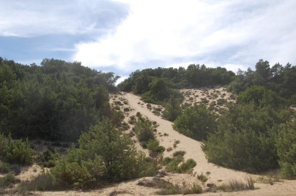 dune costiere con vegetazione mediterranea