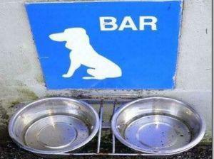 ciotole di acqua per cani