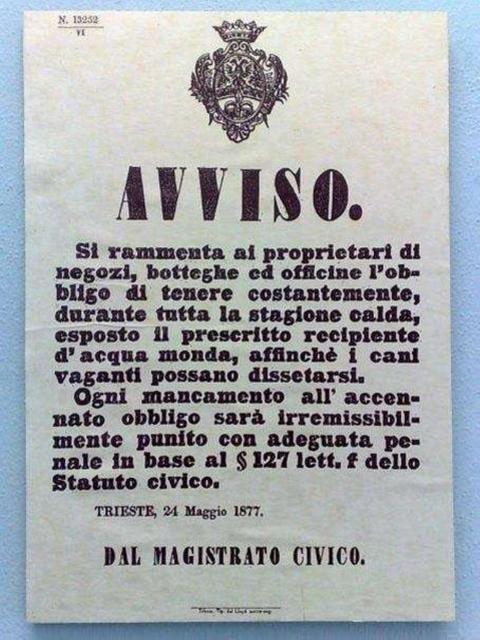 Comune di Trieste, avviso ciotole acqua per cani (1877)
