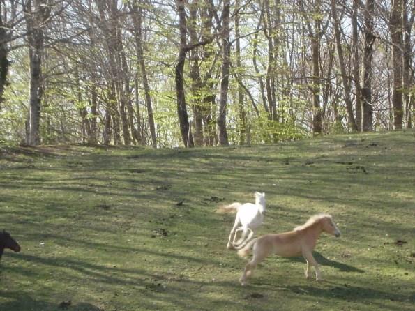 Toscana, Castell'Azzara, bosco e cavalli