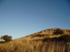 l'albero, la collina e la luna