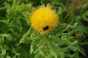 fiore e insetto