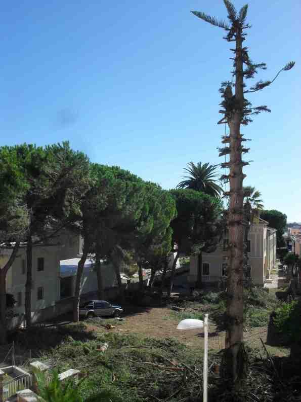 Carloforte, Villa Aurora, alberi tagliati
