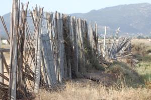 Cagliari, Stagno di Capoterra, Progetto Gilia, percorso naturalistico, protezione in canne semi-divelta