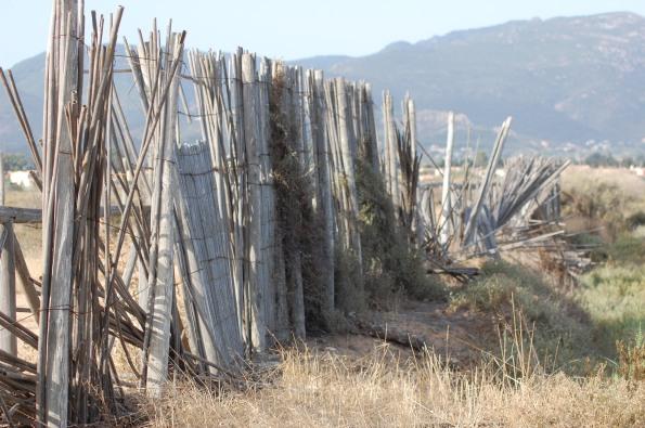 Cagliari, Stagno di Capoterra, protezione in canne semi-divelta