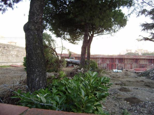 Firenze, Due Macelli, taglio degli alberi (genn. 2010)