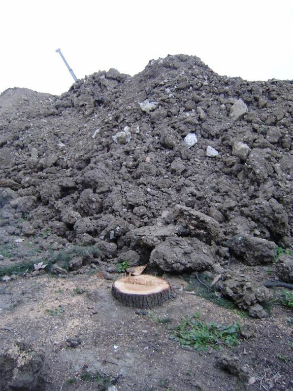 Firenze, Due Macelli, taglio degli alberi e primi scavi (marzo 2010)
