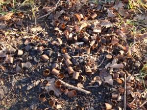 Marostica, bossoli bruciati nel bosco