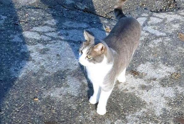 il gatto Toldo