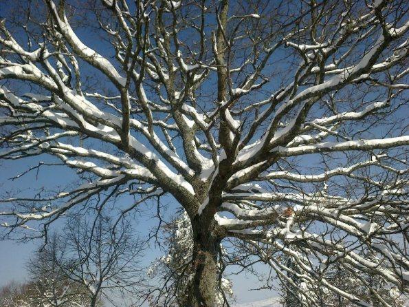 albero e neve