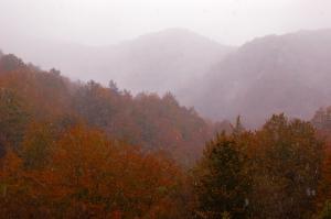 Umbria, Appennino, boschi