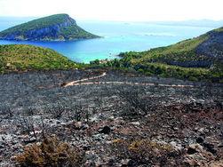 Golfo Aranci, Capo Figari, effetti dell'incendio del 24 giugno 2013