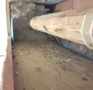 Cagliari, distruzione nido di Rondone pallido (Apus pallidus) nel cassone della serranda