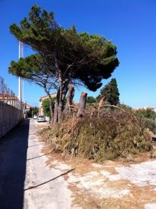 Carloforte, ex campo sportivo, taglio alberi