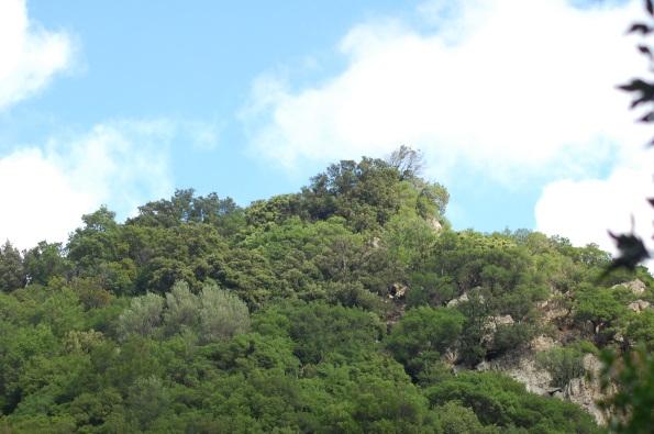 bosco e cielo