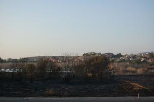 """Quartu S. Elena, parco naturale regionale """"Molentargius - Saline"""", incendio (agosto 2013)"""