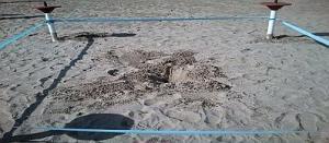 Roseto degli Abruzzi, area del nido di Tartaruga marina (Caretta caretta)